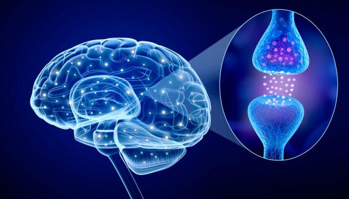 cerebro-700x400